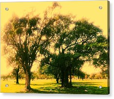 Cemetery Trees Acrylic Print by Lee Farley