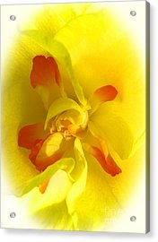 Center Daffodil Acrylic Print by Tina M Wenger