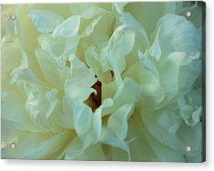 Acrylic Print featuring the photograph Center by Haren Images- Kriss Haren