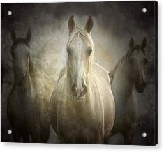 Center Of Attention Acrylic Print by Ron  McGinnis