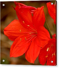 Center Stage Acrylic Print by Art Block Collections