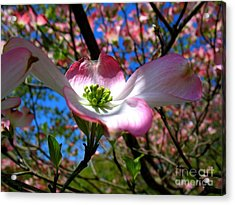 Center Stage Acrylic Print by Patti Whitten