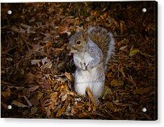 Central Park Squirrel Acrylic Print by Marta Grabska-Press