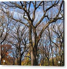 Central Park Trees Acrylic Print