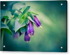 Cerinthe Abstract Acrylic Print by Priya Ghose