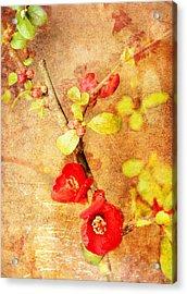 Acrylic Print featuring the digital art Chaenomeles by Helene U Taylor
