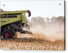 Chaff From Rapeseed Harvesting Acrylic Print by Lewis Houghton/science Photo Library