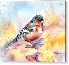 Chaffinch 3 Acrylic Print by Inese Poga