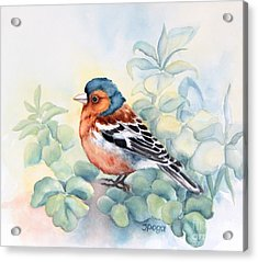 Chaffinch In Grass Acrylic Print