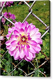 Chain Link Bloom Acrylic Print
