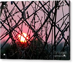 Acrylic Print featuring the photograph Chain Link Sunset by Jennie Breeze