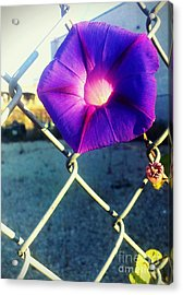 Chained Splendor Acrylic Print by James Aiken
