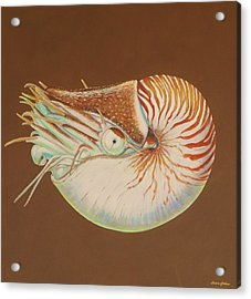 Chambered Nautilus Acrylic Print by Bonnie Golden