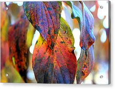 Changing Leaves Acrylic Print by Dorothy Hall