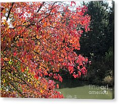 Changing Leaves Acrylic Print