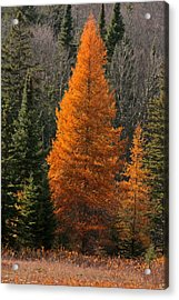 Changing Of The Seasons Acrylic Print by Kathy  Kujala