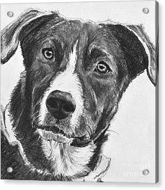 Charcoal Dog Shepherd Acrylic Print