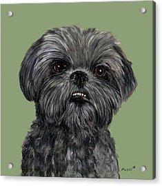 Charcoal Shih Tzu  Acrylic Print