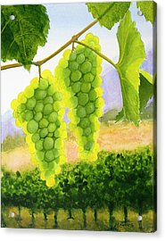 Chardonnay Grapes Acrylic Print by Mike Robles