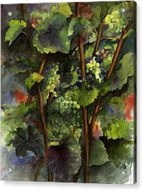 Chardonnay Dans L'ombre Acrylic Print by Maria Hunt