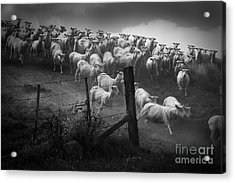 Charging The Gate In Black And White Acrylic Print
