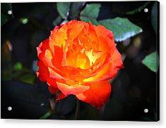 Charisma Rose Horizontal Acrylic Print