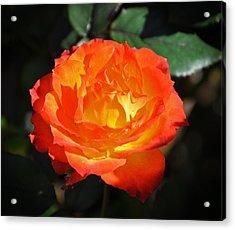 Charisma Rose Acrylic Print