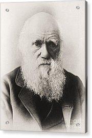 Charles Darwin Acrylic Print by English School