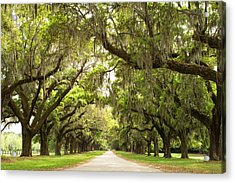 Charleston Avenue Of Oaks Acrylic Print