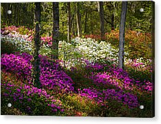 Charleston Sc Azalea Flowers And Sunlight - Fairytale Forest Acrylic Print