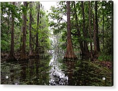 Acrylic Print featuring the photograph Charleston Swamp by John Johnson