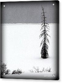 Charlie Brown's Christmas Tree Acrylic Print
