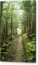 Acrylic Print featuring the photograph Charlies Bunion Bald Trail by Debbie Green