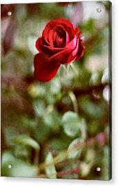 Charming Life Acrylic Print