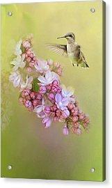 Chasing Lilacs Acrylic Print