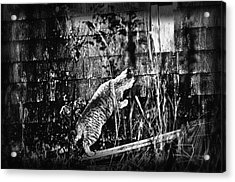 Chasing Shadows Acrylic Print by Susan Capuano