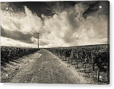 Chateau Lafite Rothschild Vineyards Acrylic Print by Panoramic Images