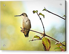 Acrylic Print featuring the photograph Chatter by Tammy Schneider