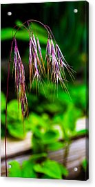 Cheating Purple Acrylic Print