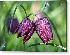 Checkered Lily Acrylic Print