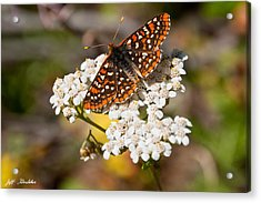 Acrylic Print featuring the photograph Checkerspot Butterfly On A Yarrow Blossom by Jeff Goulden
