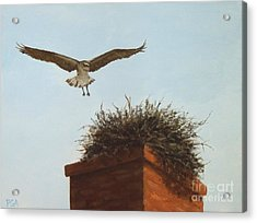 Checking The Nest Acrylic Print