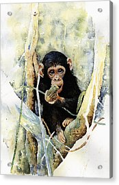 Cheeky Acrylic Print by Roger Bonnick
