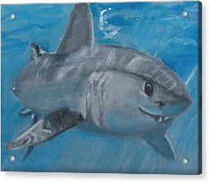 Cheeky Shark Acrylic Print