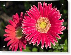 Cheerfulness Acrylic Print by Arlene Carmel