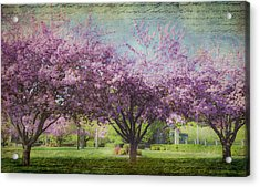 Cheery Cherry Trees - Nostalgic Acrylic Print