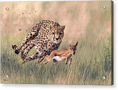 Cheetah And Gazelle Painting Acrylic Print by Rachel Stribbling