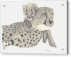 Acrylic Print featuring the drawing Cheetah And Her Cub 1 by Patricia Hiltz