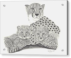 Cheetah And Her Cubs Acrylic Print by Patricia Hiltz