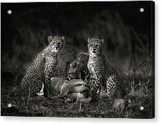 Cheetah Cubs Acrylic Print by Mario Moreno